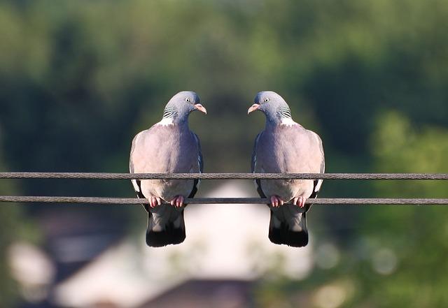 birds-368805_640