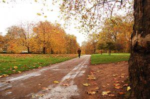 1111274_london_park_2