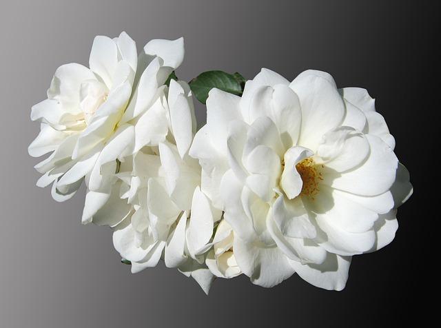 flowers-97681_640