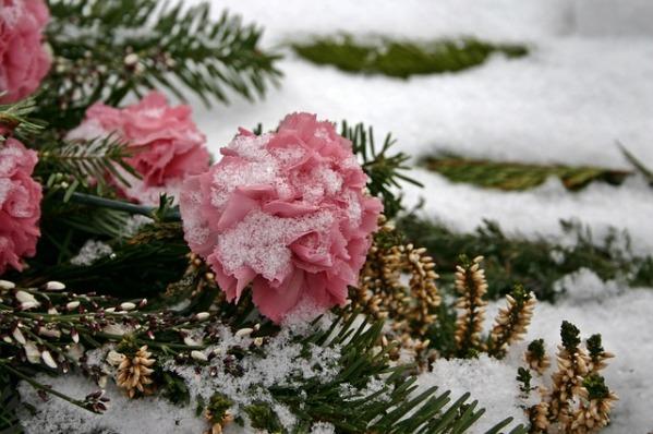 cemetery-flowers-500341_640