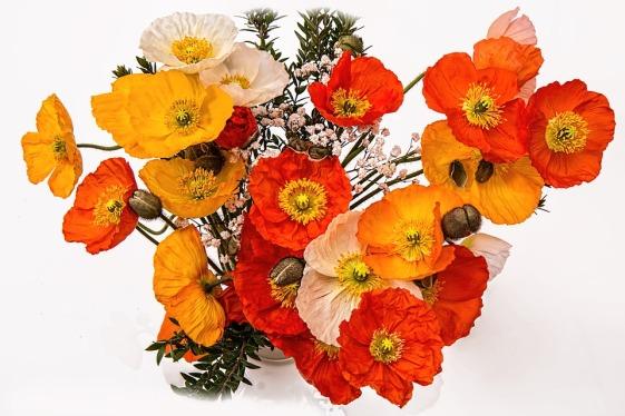 poppies-1631682_960_720