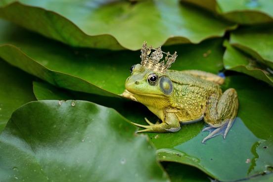 bull-frog-2525989_960_720